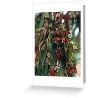 Migrating Monarchs Greeting Card