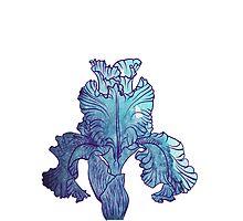 Iris flower Photographic Print