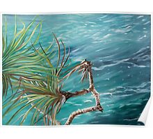 Noosa National Park series 4. Poster