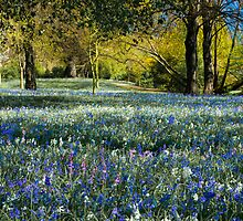 Beautiful Bluebells by Neil