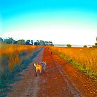 dogs at farm by kirst68