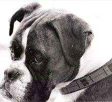 dog by kirst68