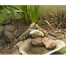 """""""Compilation of Lizards"""" Photographic Print"""