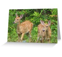 Fawns  Greeting Card
