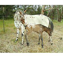 Appaloosa Mare & Foal Photographic Print