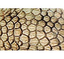 Dragon Skin Photographic Print