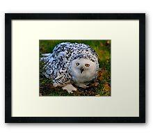 Mrs Snowy Owl Framed Print