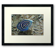 Blue ocean life Framed Print