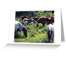 Ponies - Egrets Greeting Card