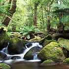 Beeches waterfall, Marysville by Vicki Moritz