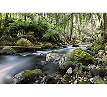 Meeting of the Waters, Beeches, Marysville, Victoria Photographic Print
