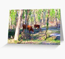 Texas Cattle Pasture Greeting Card