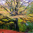 Autum Colours by Kathryn Considine