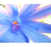 Blue Sunrise Photographic Print
