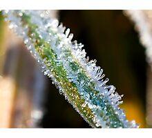 Frosen grass Photographic Print