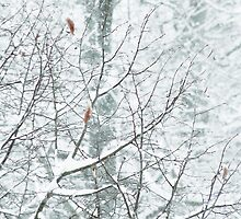 White Nature by rose-etiennette