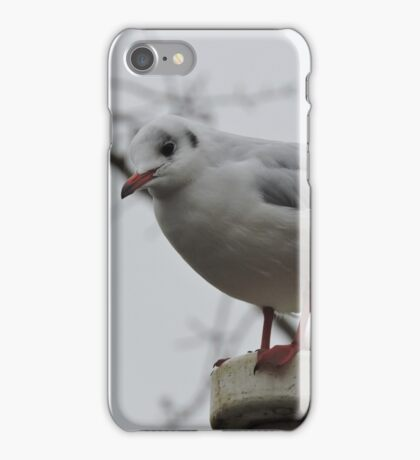 Master Of The Mast iPhone Case/Skin