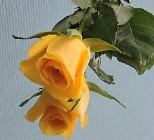Yellow Rose on Glass by CreativeEm