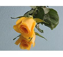 Yellow Rose on Glass Photographic Print