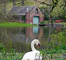 Swan Lake at Fyvie Castle  by AndyMartin