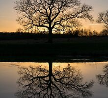 Mirror Tree by bennyhawes