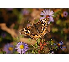 Indian Summer Photographic Print