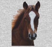 Chestnut foal by LynneHerry