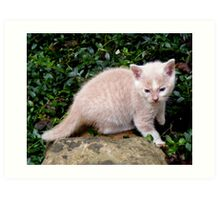 Wild Bill Kitten first outside adventures Art Print
