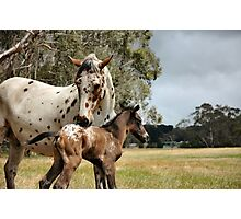 Appy foal Photographic Print