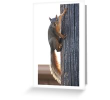 The Amazing, Spiderman Squirrel!!! Greeting Card