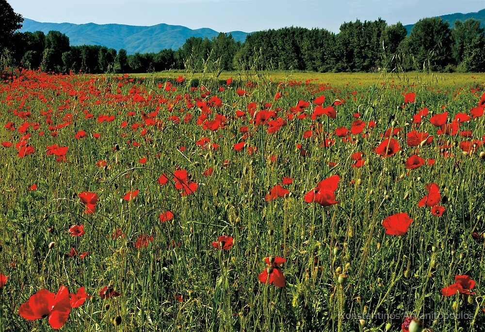 Poppy fields by Konstantinos Arvanitopoulos