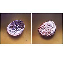 Abalone Shell Photographic Print