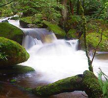 Taggerty River Cascades by aerdeyn