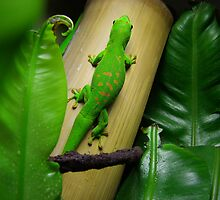 Madagascar Day Gecko II by iriserasmus