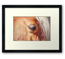 Palomino close-up Framed Print