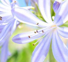 Blue Monday by Ann Barnes
