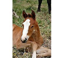 Glory's foal Photographic Print