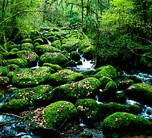 Green rocks, Becky Falls, Dartmoor by Amanda Gazidis