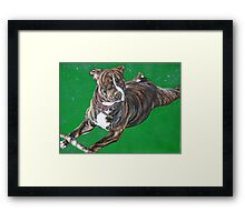 'Chaos' - The Staffordshire Bull Terrier Framed Print