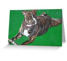 'Chaos' - The Staffordshire Bull Terrier Greeting Card