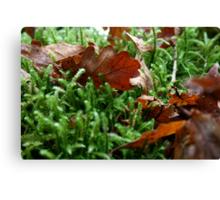Oak leaf on moss Canvas Print
