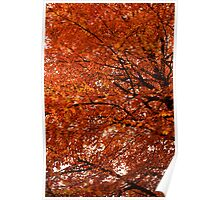 Red in late Autumn Poster