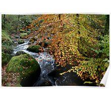 Autumn Beech and River Dart Poster