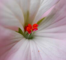 Sweet Pink by Bev Woodman