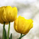 Yellow Tulips by Karen Havenaar