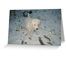 Puppy in Snow Greeting Card