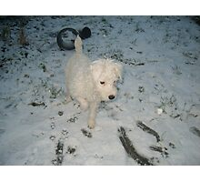 Puppy in Snow Photographic Print