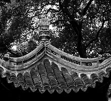 Shady Beijing Garden Roof by phil decocco