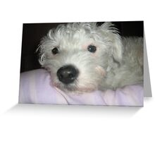 Comfy puppy Greeting Card