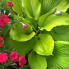 Hosta and more by grannyjune